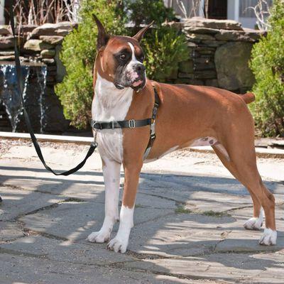 PetSafe Hundegeschirr Easy Walk S Schwarz